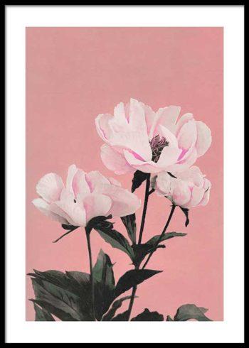 COLORIZED VINTAGE FLOWERS NO. 2 PLAKAT