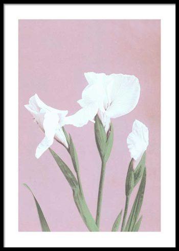 COLORIZED VINTAGE FLOWERS NO. 3 PLAKAT
