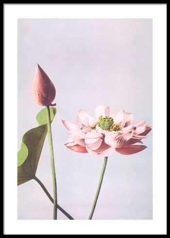 COLORIZED VINTAGE FLOWERS NO. 1 PLAKAT